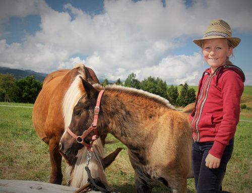 Ein Pferd als Star – Veranstaltungshinweis zum Schwarzwälder Kaltbluttag
