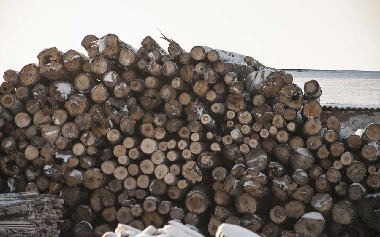 Holz Rimsingen Versteigerung