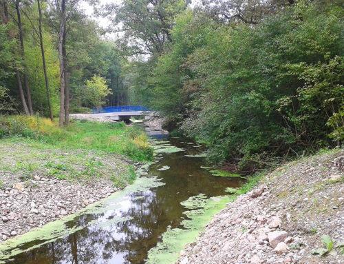 Steine versperren Schluten im Breisacher Rheinwald