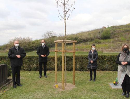 Baumpflanzung zum Gedenken an die Corona-Opfer